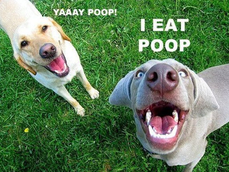 Is your dog eating poop?