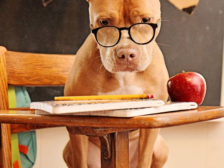 Helping your pets with Back to School