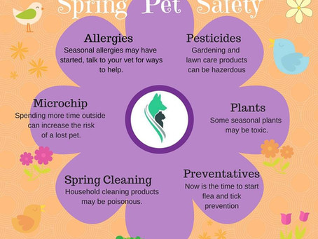 Thoughts for Spring and your pets safety