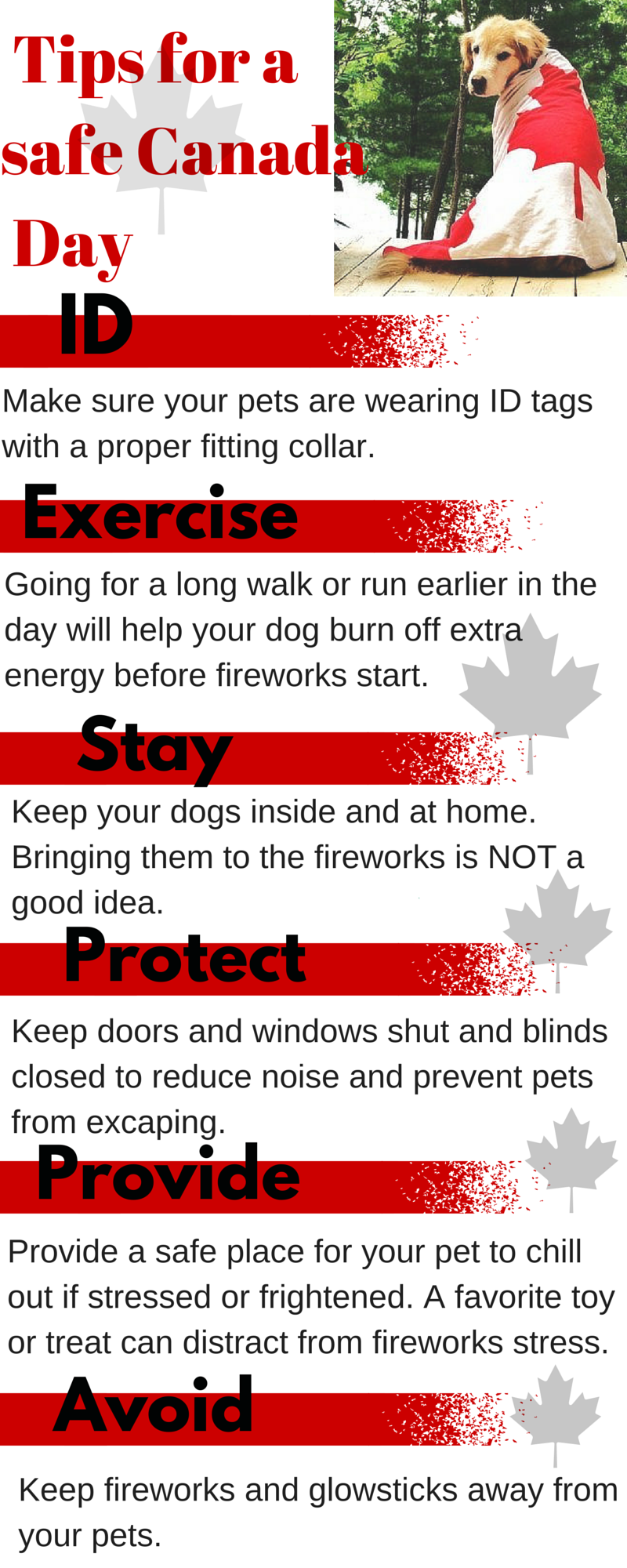 7 tips for a dog safe Canada Day (2).png