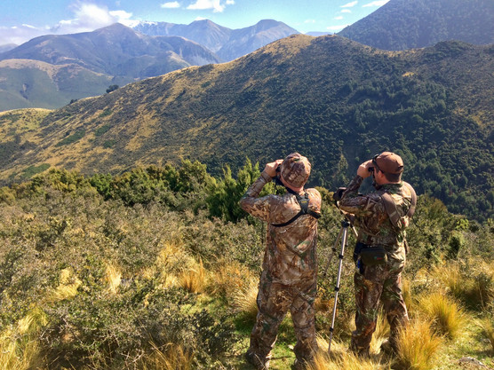 Red Stag hunting trips and prices in New Zealand