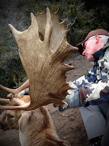 Fallow deer hunting with Backcountry New Zealand hunting outfitters