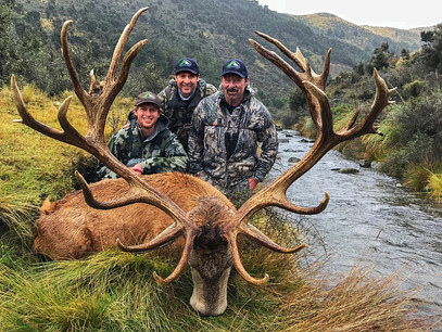 Red stag trophy hunt NZ - Cory