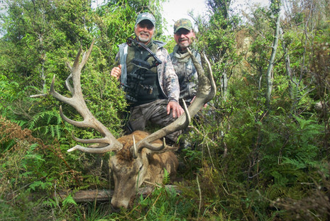 Guy's Red Stag in New Zealand