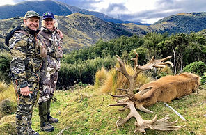 Red stag trophy hunting in New Zealand