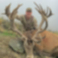 trophy red stag hunt trip new zeland with Backcountry New Zeland Guides and outfitters by Jeff Bracken