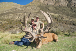 Red Stag hunt packages in New Zealand