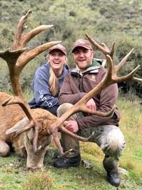 Red Stag in New Zealand - Philip and Emily