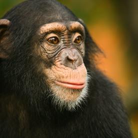 Mémoire : l'intelligence animale
