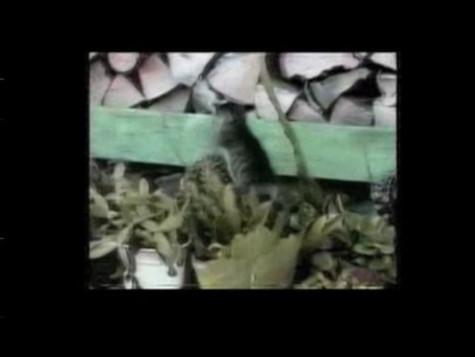 """""""Killer Kitties"""" SFX Project"""