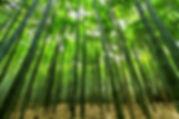 nature-dust-bamboo-green-52706.jpg