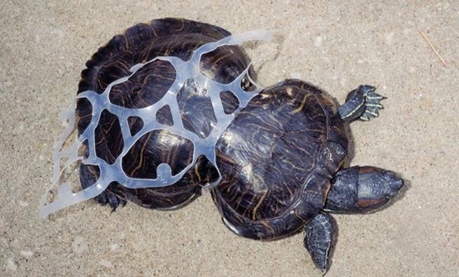 turtleeeee.jpg