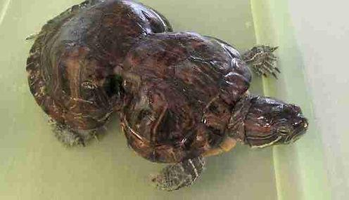 turtle 2.0.jpeg