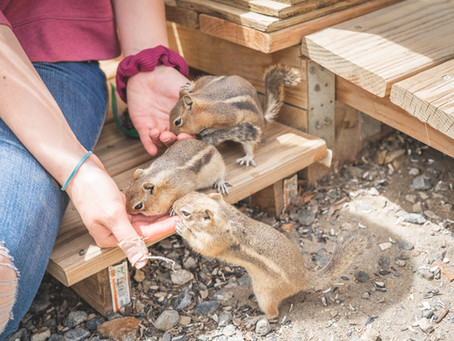 Gold Panning, Cute Critters, and Amazing Food. Oh My!