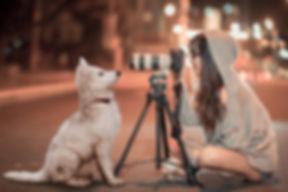 puppy-3688871_1280.jpg