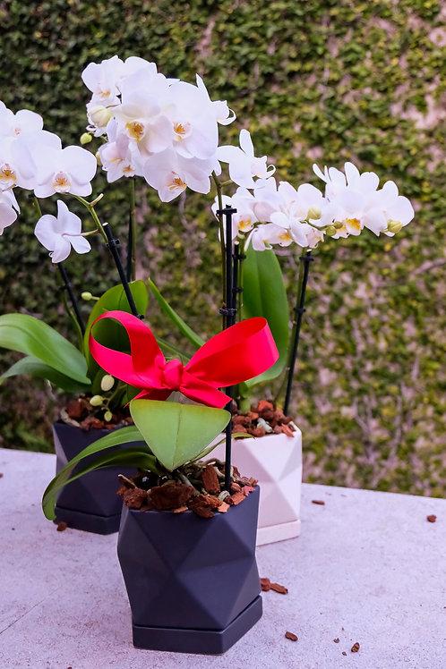 orquídea mini