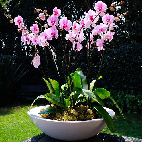 arreglo de orquídeas grande