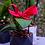 Thumbnail: orquídea mini