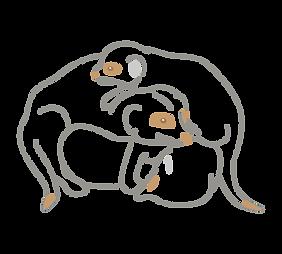 Meerkat-03.png