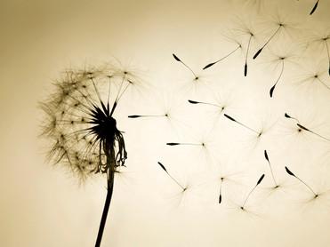 active-hope-seed.jpg