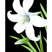 """""""Easter Lily"""" Canvas at Tagua Nut Cafe (4/19)"""