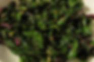 Gayatri Greens Pic.jpeg