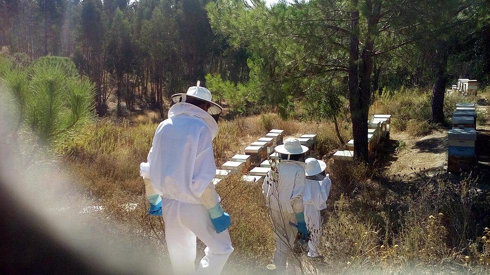 onde ir a um apiário - o que posso ver n