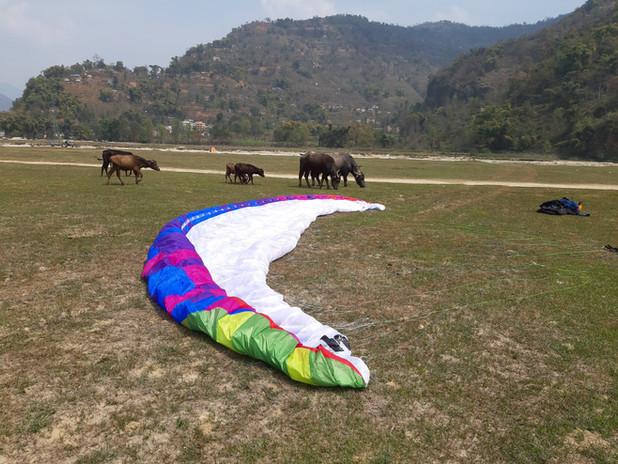 nepal buffalo paraglider