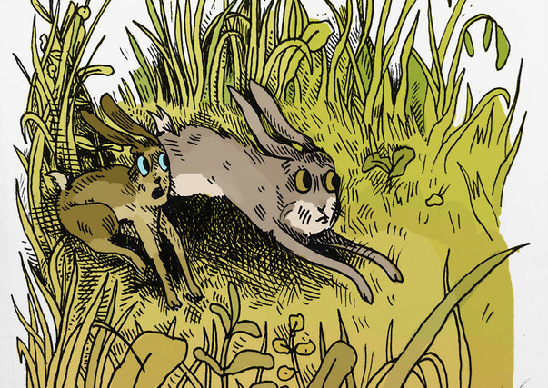 Watership Down Meadow color