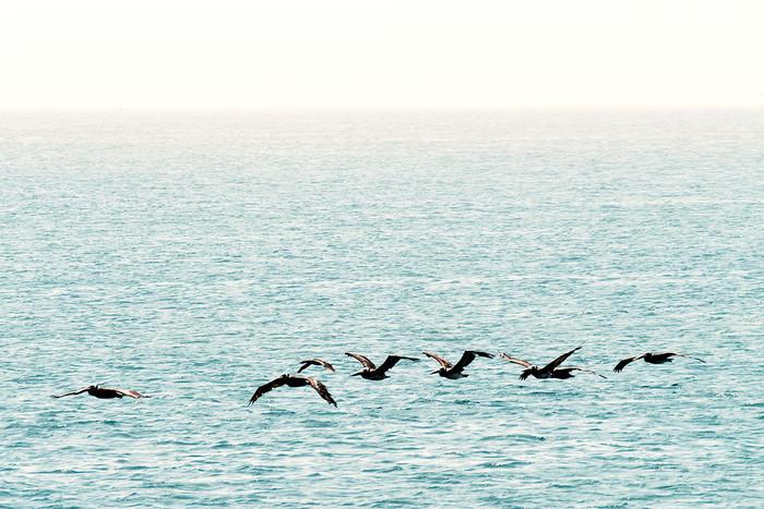 Pelican Island | 2 Fotos
