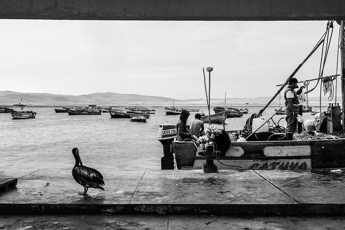 Das Schiff des Pelikans   3 Fotos