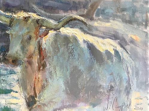 'Cool Longhorn'