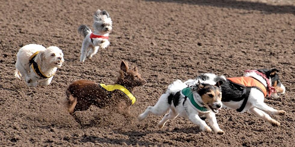 Doggie Derby