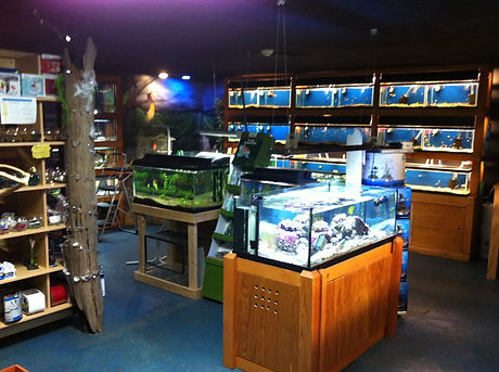 Pet's World | Pet Shop | Weymouth | Grooming