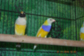 finches 1.jpg
