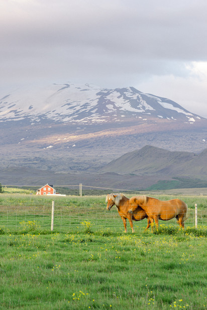 Iceland postcards