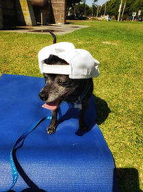 "<img src=""20191007_120103-01.jpeg"" alt=""a small black dog wearing a white cap backwards sitting on a blue yoga mat panting"">"