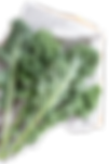 """<img src=""""Fresh%20Kale_edited.png"""" alt=""""fresh kale leaves laid on a blue and white checkered cloth"""">"""