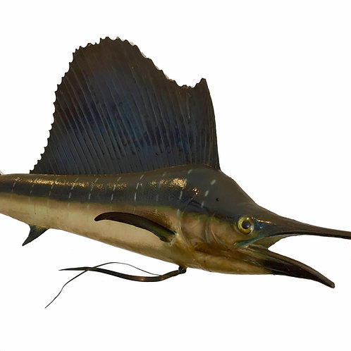 Taxidermy Marlin