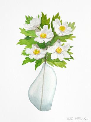 Canada Anemone Bouquet in Vase, 2021