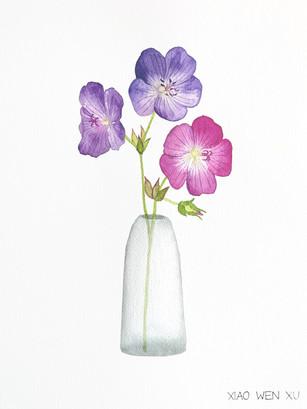 Geranium Bouquet in Vase, 2021