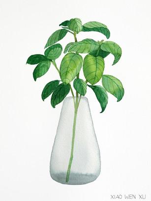 Basil Bouquet in Vase, 2021