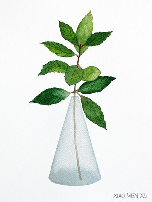 Bay Leaf Bouquet in Vase, 2021