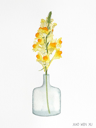 Butter and Eggs Bouquet in Vase, 2021