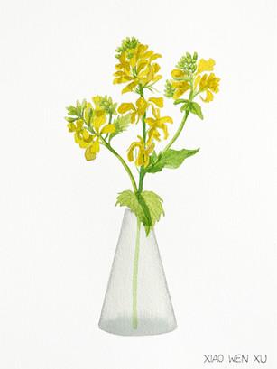 Wild Mustard Bouquet in Vase, 2021