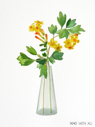 Golden Currant Bouquet in Vase, 2021