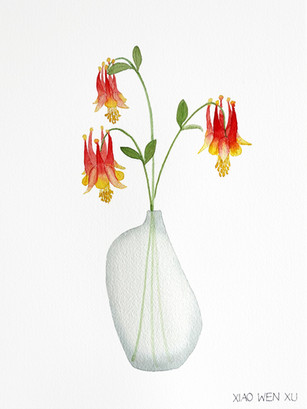 Wild Columbine Bouquet in Vase, 2021