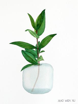 Lemon Myrtle Bouquet in Vase, 2021