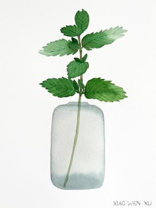 Mint Bouquet in Vase, 2021