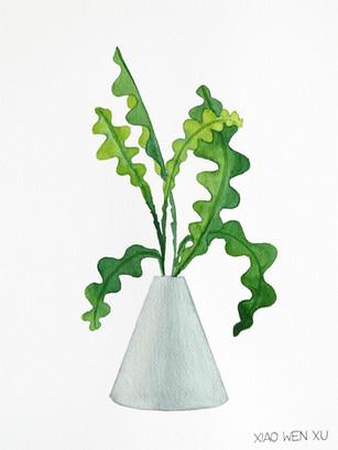 Fishbone Cactus Bouquet in Vase, 2021